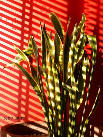Copy_of_light_and_plant_1